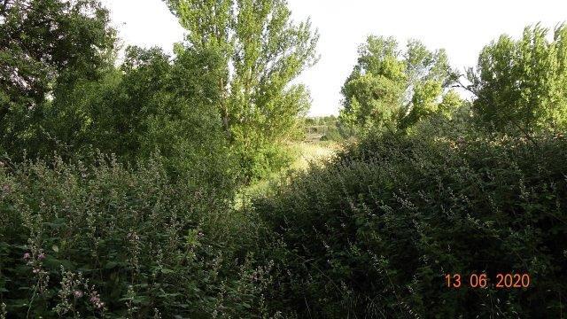 Ribera del Tormes, Tormes Plus (19)