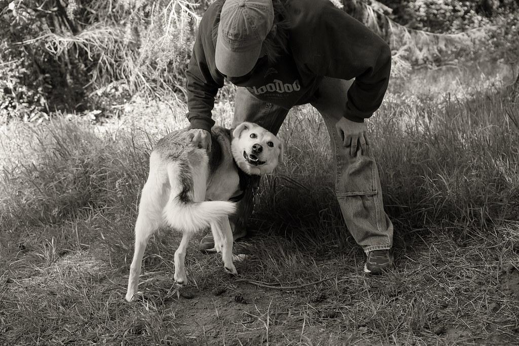 Scritch Scritch Dr Ozda And Musky Bordadorhund Flickr