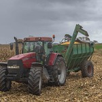 Maize HarvestColour_68