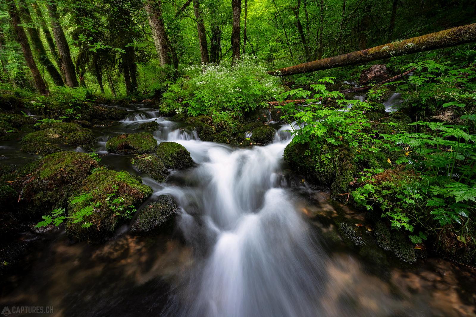 Green velvet - Gorges du Pichoux
