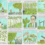 Jardinería en tiempos de Pandemia