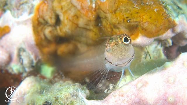 幼魚の季節、たくさんの方々に見てもらいたいです!!!