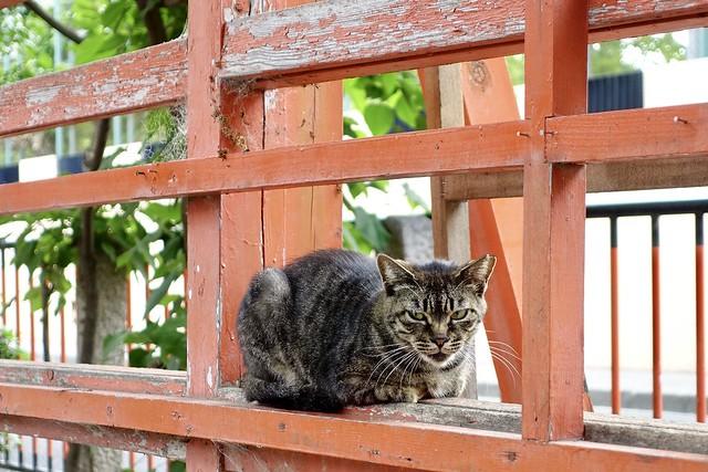 Today's Cat@2020ー06ー14