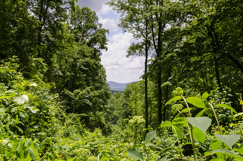 northern georgia appalachian mountains outdoor forest woods wilderness landscape the south