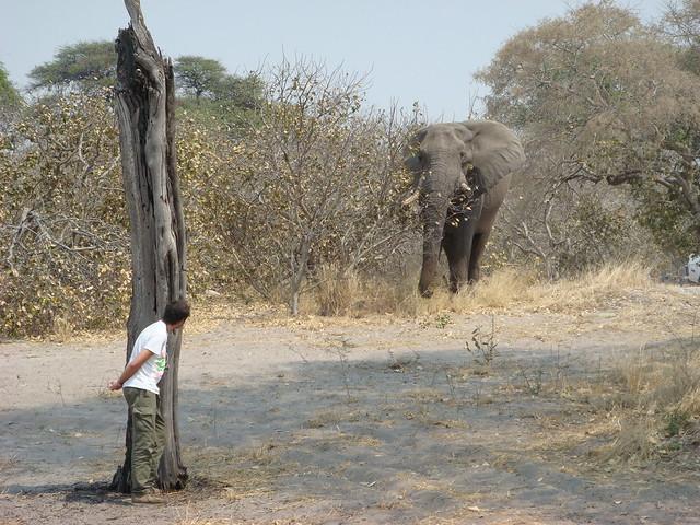 Botswana_Savuti_visite_nel_campeggio_1