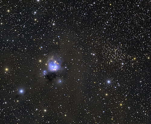 NGC7129 AND CLUSTER 7142 | by Shaun Reynolds