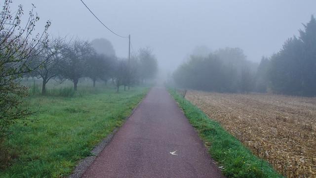 Le verger dans le brouillard