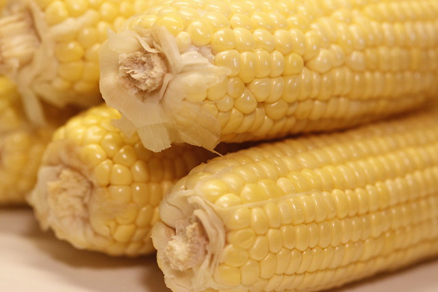 Ears of Corn ~ Ready for the Grill