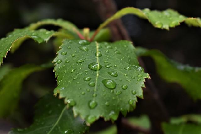 14-06-2020 Despues de la lluvia.