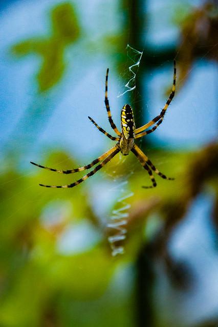 2020 Visions 6.11 ~ Yellow Garden Spider