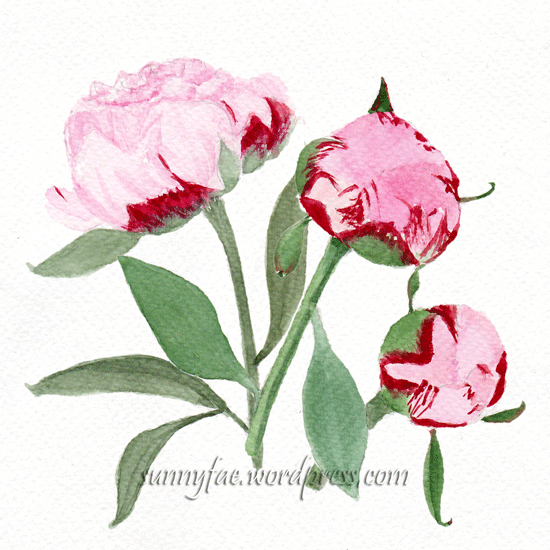 watercolour peony and buds