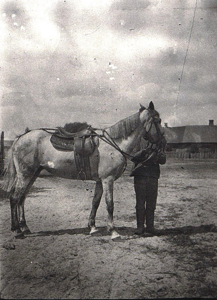 Жертва передвижения отряда (лошадь)
