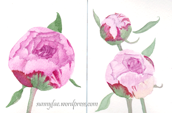 watercolour peonies on A6 paper