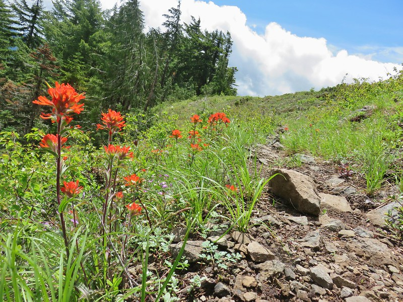 Henline Mountain Trail