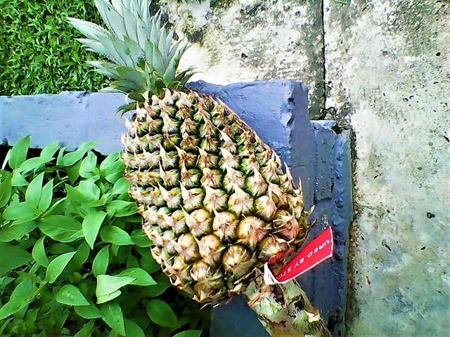 Pineapple from Alex