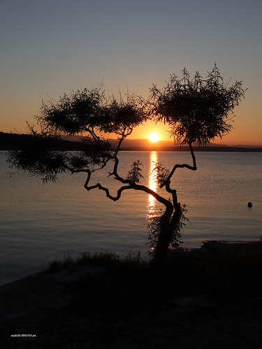 sea seaside shore sun sunset dusk tree tamaris atmospheric canon adriatic croatia hrvatska europe silhouette vividstriking