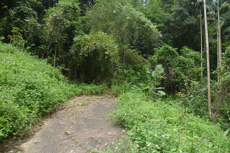 東坑山南峰荒廢水泥產道 (1)