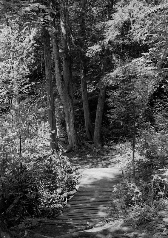 Bruce Trail Inside Silver Creek Conservation Area