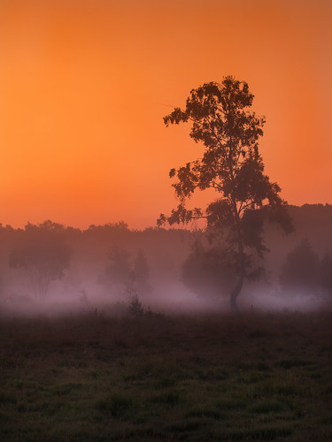 morning mist misty mood moody morningmist infocus ipingcommon summer sun sunrise canon sussex countryside westsussex south atmosphere calm atmospheric ef70200mmf4lusm canon750d canoneos750d light england sky orange tree dawn glow heath clearsky lonelytree englishcountryside heathland firstlight new wood trees start woodland landscape golden haze fresh dawning goldenhour lightroom thegoldenhour woods earlymorning morningwalk wooded exposure longexposure 2seconds explore inexplore