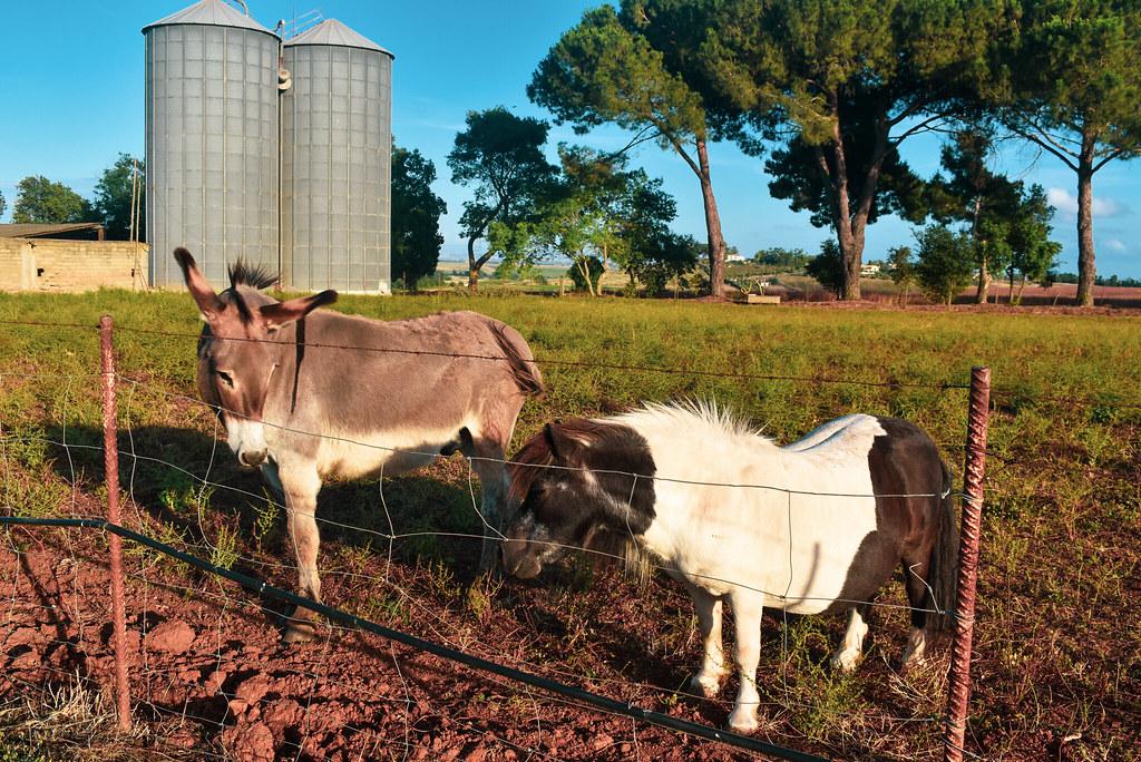 Un burro y un ponny