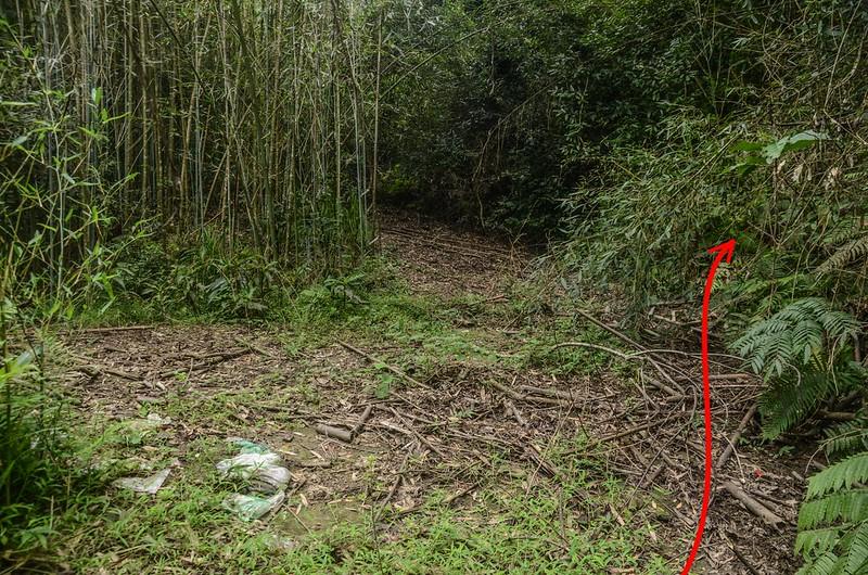 錫隘山廢產道上切竹林處