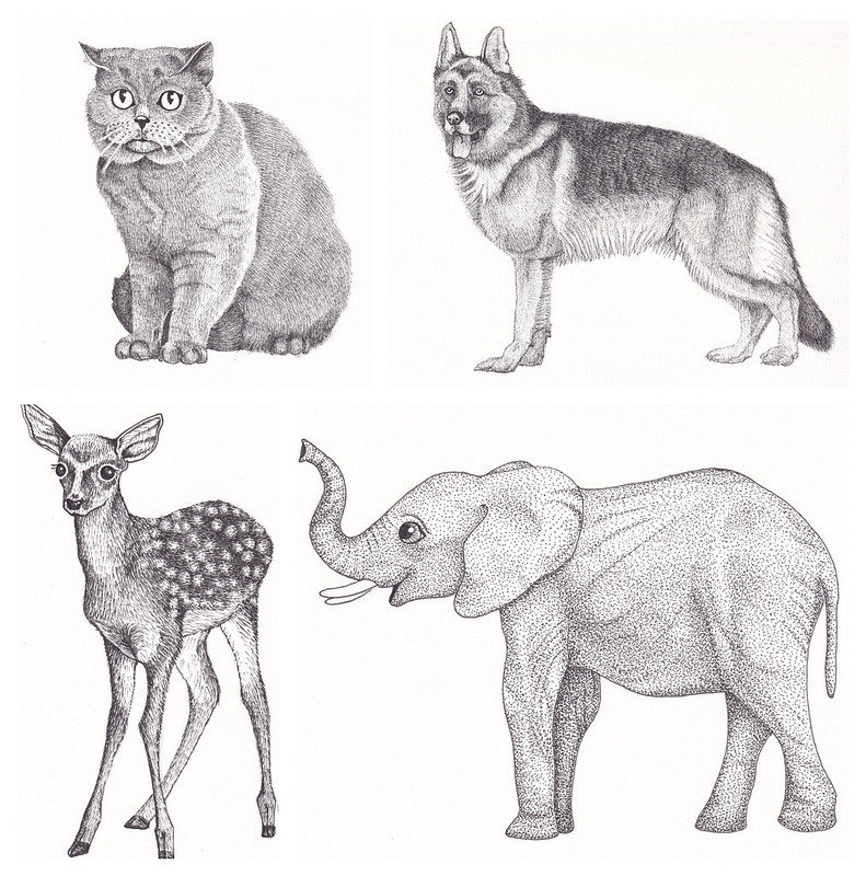Pet illustrations 2