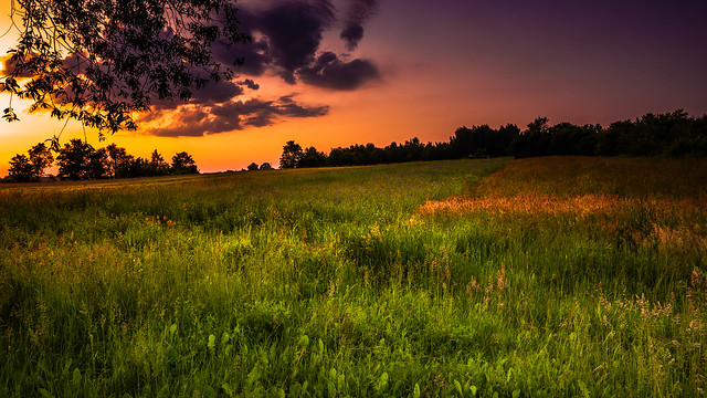 The smell of the meadow