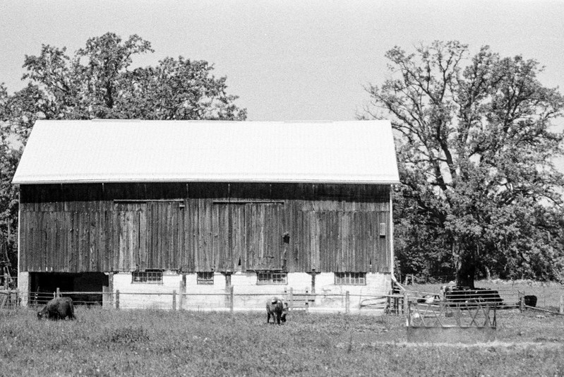 Another Halton Hills Barn TWo