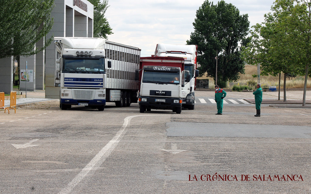 mercado_ganado (48)