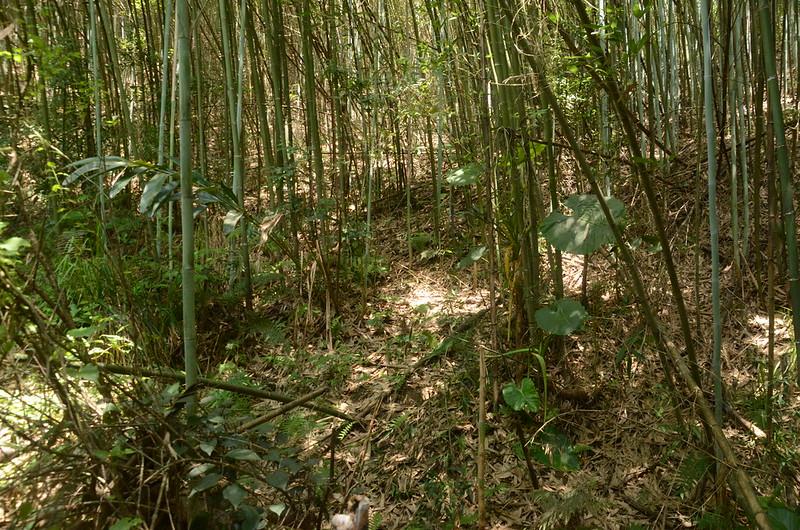 湖塘山竹林山徑