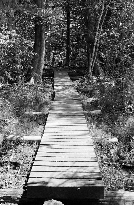 Path through the Bog