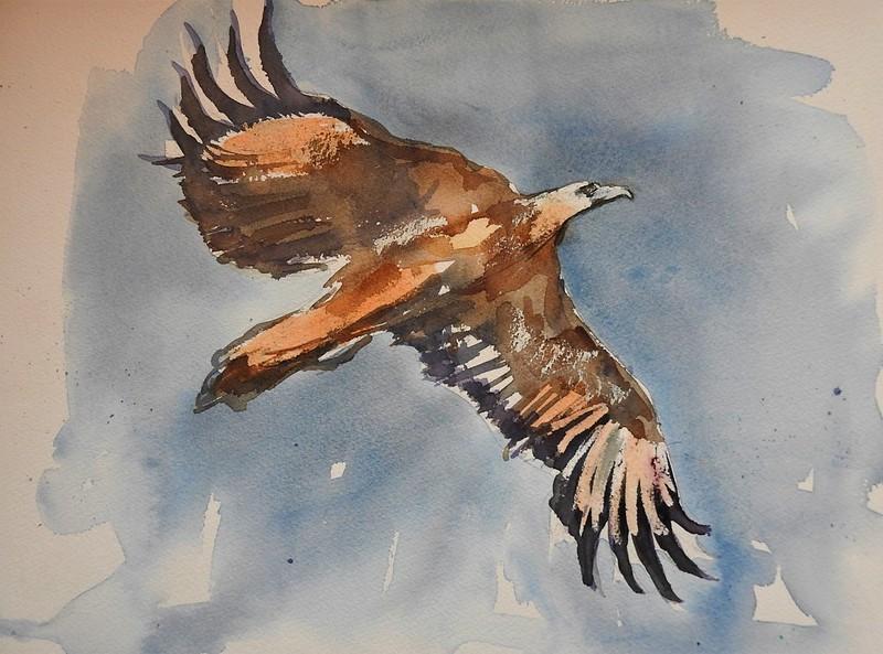 Adler-Aquarelle-Nadia-Baumgart