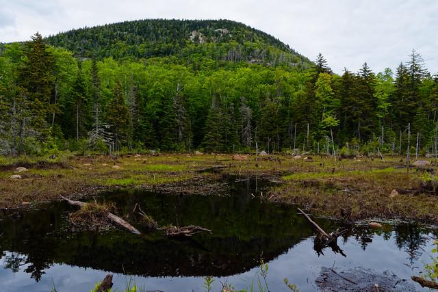 Adirondack Wetland