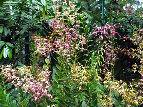 Orchids cascading over everything in the Singapore Botanical Garden