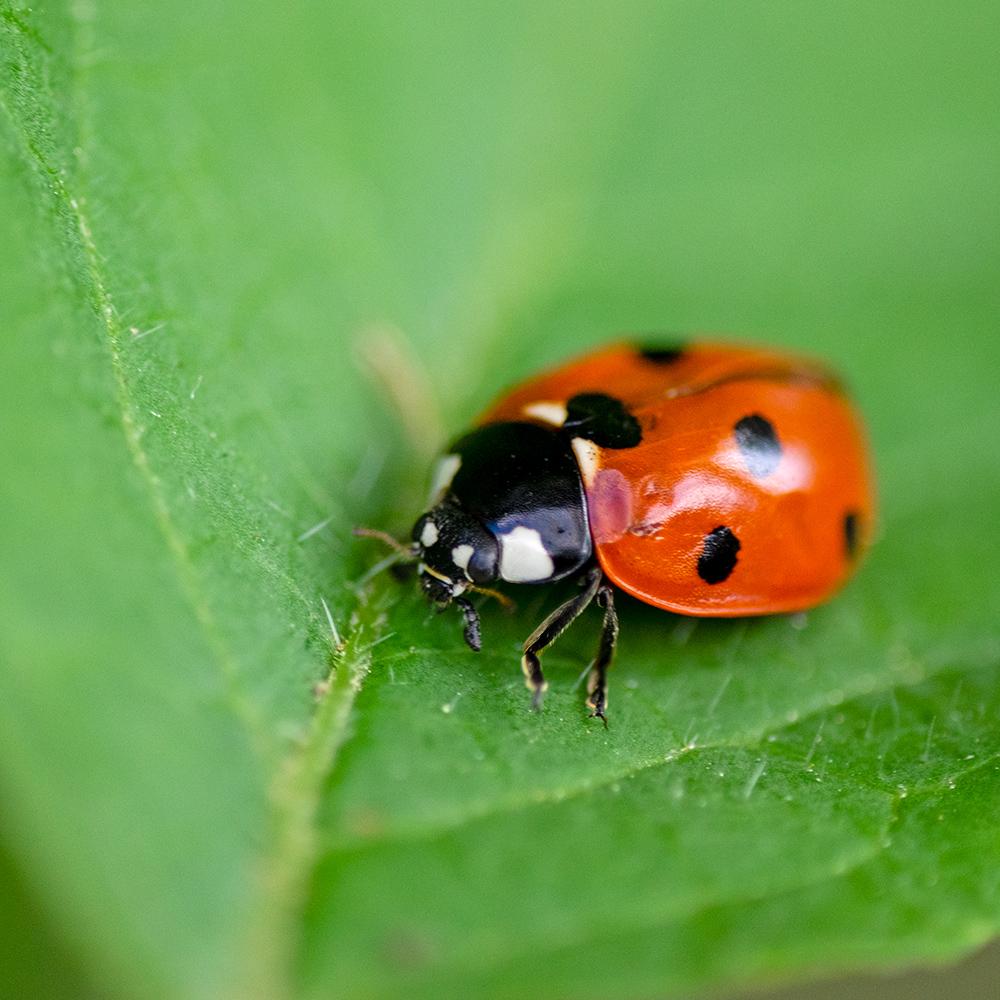 Macros/  proxi/  insectes  - Page 40 50010400842_97f982c37e_o