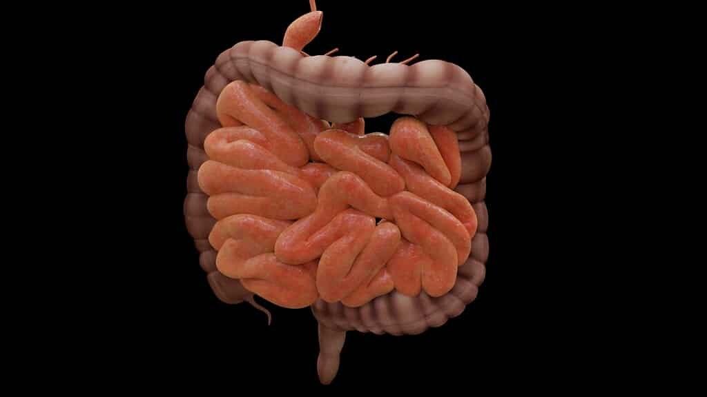 des-molécules-roccigent-les-bactéries-pour-réduire-le-cholestérole