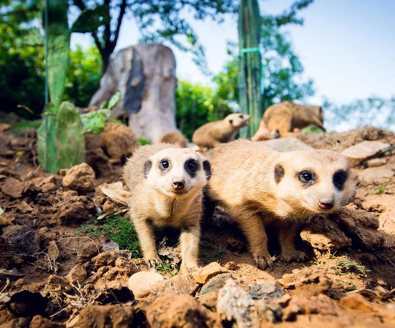 Animals at Qingdao Forestry Wildlife World