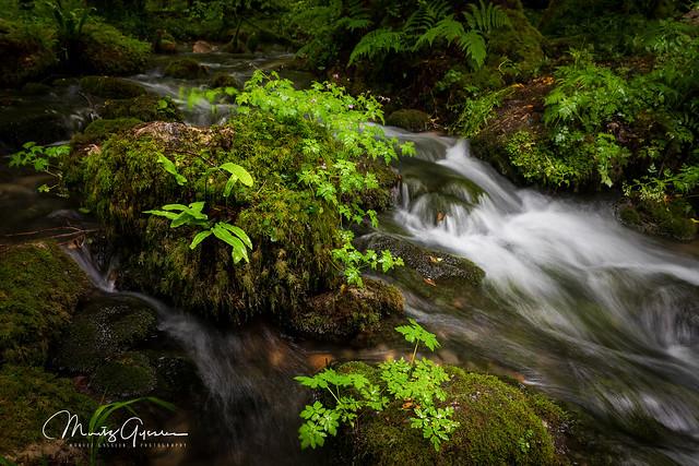 Wet green fairyland