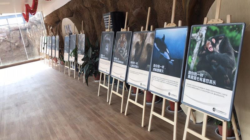 """Animals Asia' """"One Life - animal sentience and emotions"""" educational poster exhibition at Qingdao Forestry Wildlife World"""