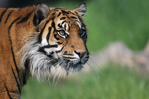 Georgina Ingham | Culinary Travels A Guide to Cork, Ireland. Fota Wildlife Park is part of the Zoological Society of Ireland is located on 100 acres at Fota Islad. There are a huge variety of animals to observe and learn about. A fabulous family day out.
