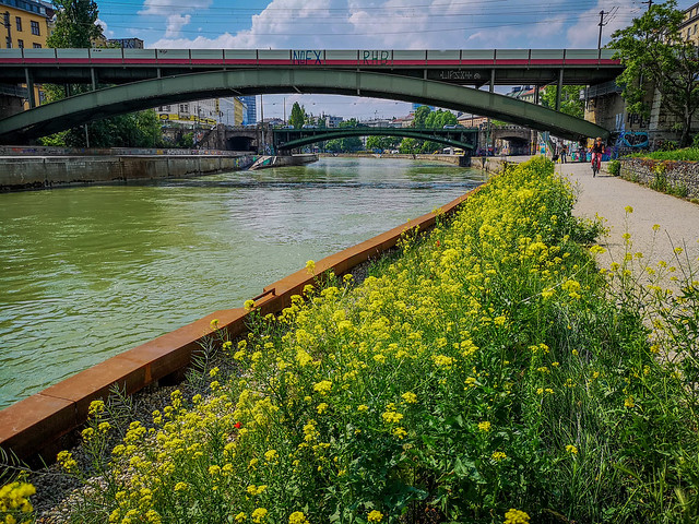 The wild flowers of springtime along the Viennese Danube Canal.