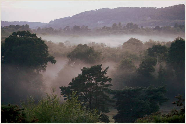 As the day entered the blue hour the mist began to rise from the ground: 15 June 2020