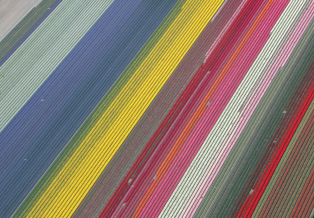 Tulip fields (and hyacinths) from above, the Netherlands