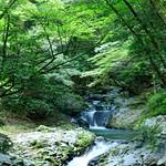 Forest of Amagi, Izu