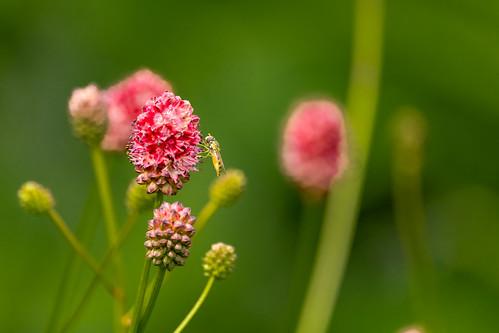 De tuin in de lente