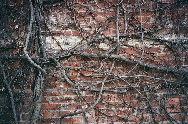 vines and bricks