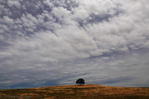 4cornersphoto calaverascounty california clouds foothills grass landscape nature northamerica oak outdoor pasture quercus ranch rural scenery sky spring stratocumulus tree unitedstates weather valleysprings unitedstatesofamerica