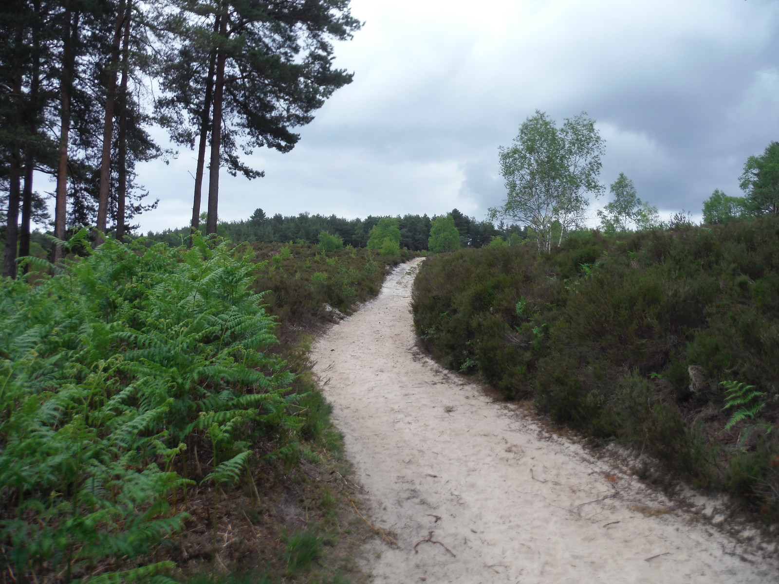 Sandy Ascent on Hankley Common SWC Walk 184 - Bentley to Farnham