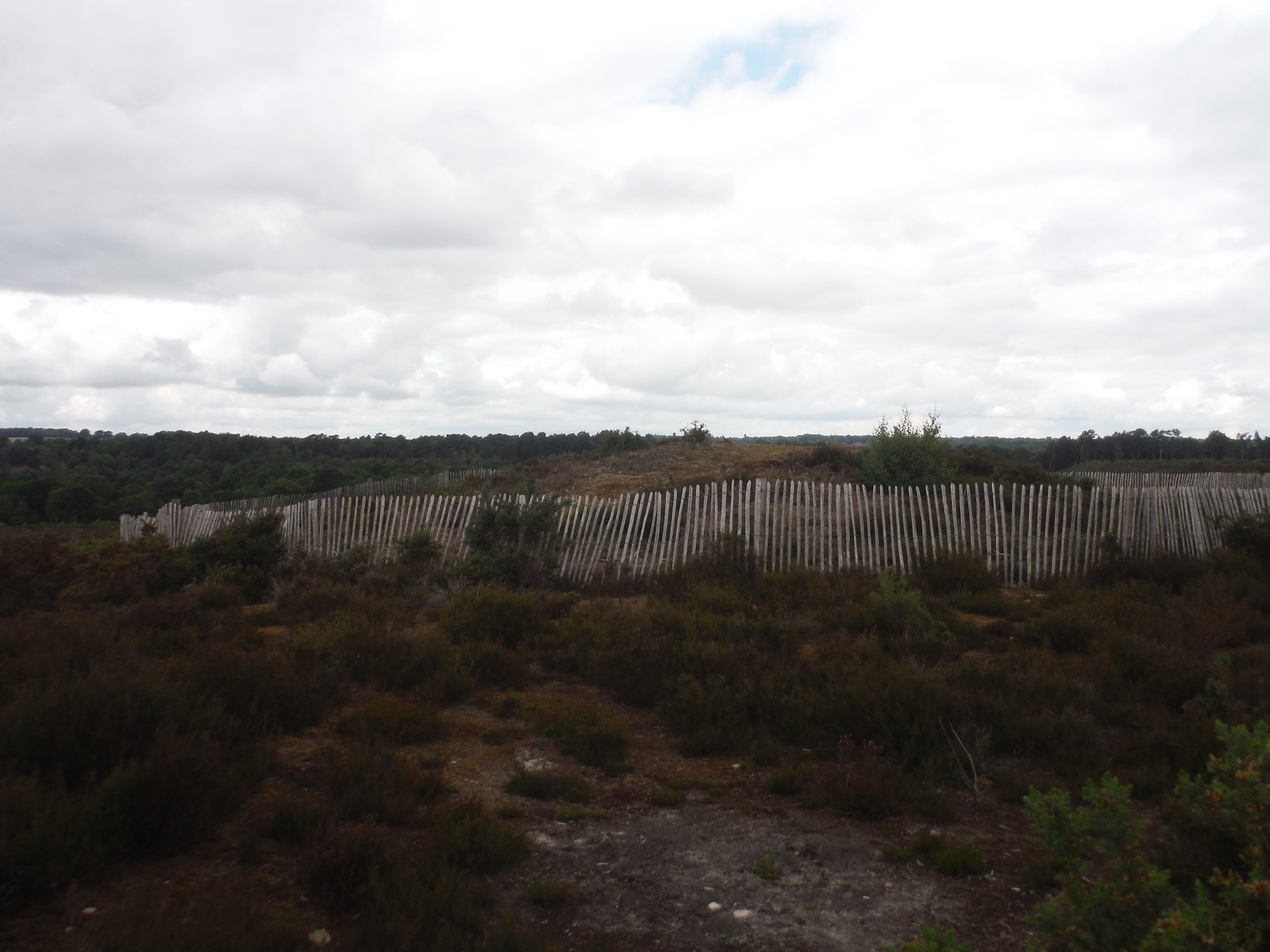 Northerly Tumulus on Frensham Common SWC Walk 184 - Bentley to Farnham