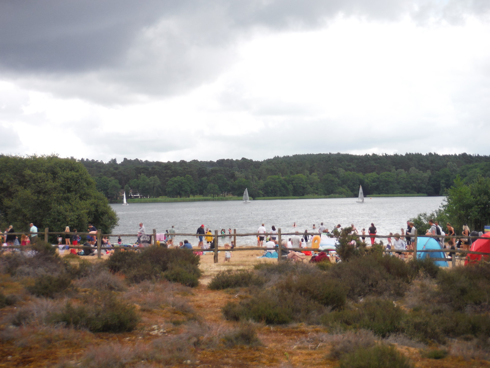 Beach at Frensham Great Pond, during Covid Lockdown SWC Walk 184 - Bentley to Farnham